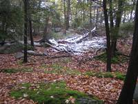 Snow in a Clearing Harriman State Park NY