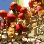 """Sunny Fruit"" by LRobinsonIII"