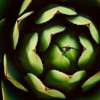concentric cactus Art Prints & Posters by Neil Bernhart