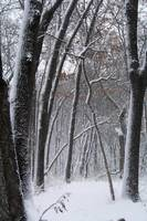 Browns Woods in Winter 2