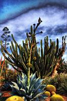 Agave Flower and Cactus
