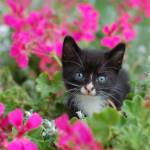 """kitten in flowers"" by jasonarends"
