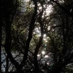 """Controluce #2 - Sawyer Trail"" by MarcoBrambilla"