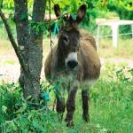 """Provence Donkey,Photo"" by nadinerippelmeyer"
