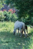 Giverny Mare and Foal