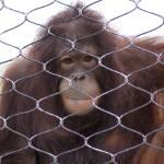 """Omaha Zoo 8-2"" by jeff_carrel"