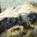"""Ferns"" by SteveNewcombe"