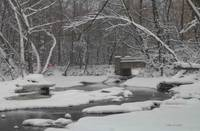 Snowy Creek in the Woods
