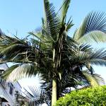 """""""Palm Heaven Love"""" by abstractnataron"""