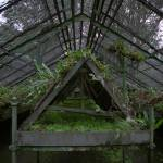 """Greenhouse Interior at Limbe Gardens, Cameroon"" by jaredjared"