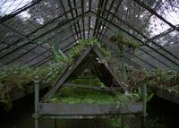Greenhouse Interior at Limbe Gardens, Cameroon
