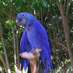 """Purple Bird"" by memoriesoflove"