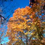 """Fall Trees"" by memoriesoflove"