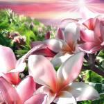 """Plumeria Canopy vertical"" by renyen"