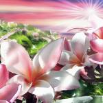 """Plumeria Canopy horizontal"" by renyen"