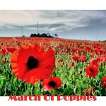 """""""March of Poppies"""" by annemade-art"""