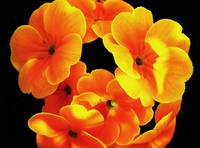 The Orange Flowers