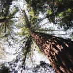 """""""Trees"""" by davila"""