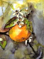 Orange Botanical Watercolor & Ink