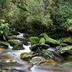 """temperate rainforests in Fiordland National Park"" by wildernessphotographs"