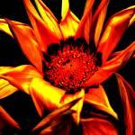 """""""Sunburned"""" by chansonette55"""