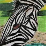 """Cape Mountain Zebra Grazing"" by SunfluerDesigns"
