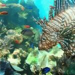 """""""Scorpion Fish"""" by renyen"""