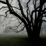 """White Oak in Fog"" by OutsideShooter"