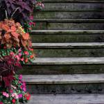 """Flowers and Steps..."" by JoanneCoyle"
