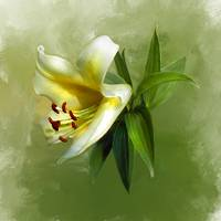 Yellow Lilly  9