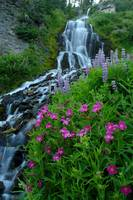 5679 Vidae Falls and Flowers 1