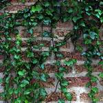 """""""Brick and Ivy..."""" by JoanneCoyle"""