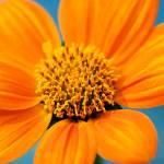 """Orange Sunburst"" by tonytheartist"