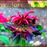 """Live...Love...DREAM!"" by DeeprBlue"