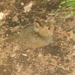 """""""Baby Bunny"""" by troydube"""