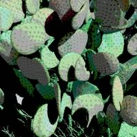 Arizona Green Cactus