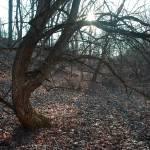 """""""Dancing Tree"""" by BearDancerStudios"""