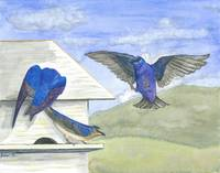 Wood House Martins