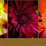"""""""Floraltreo2"""" by dlarae"""