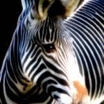 """""""Stripes"""" by EstherJohnson"""
