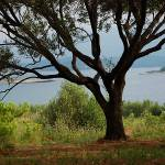 """Olive Tree by the Sea"" by HappyEye"