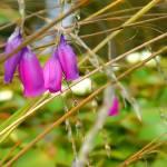 """""""Flower"""" by kenart"""
