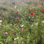 """""""Wildflower Meadow"""" by pattullo"""