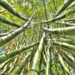 """bamboo"" by bronco"