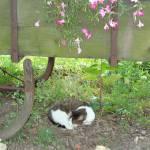 """""""cat nap"""" by LivingGaia"""