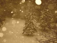 Snow Falls On Night