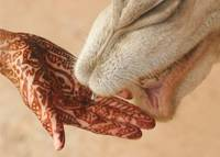 Henna Hand with Camel in Morocco