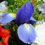 """Bouquet Centered on Iris"" by stevenphill"
