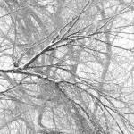 """""""Snowy Trees"""" by BooRadBop"""