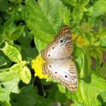 """""""butterfly"""" by MsT"""